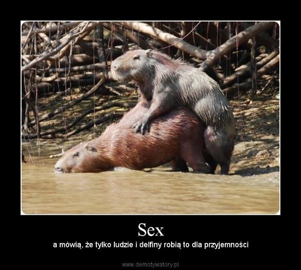 Stosunek sexualny ludzi