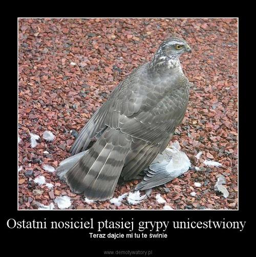 Ostatni nosiciel ptasiej grypy unicestwiony