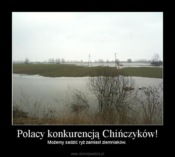 Polacy konkurencją Chińczyków! – Możemy sadzić ryż zamiast ziemniaków.