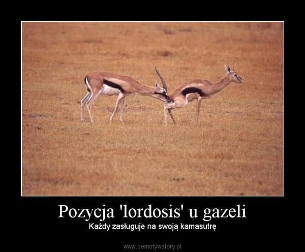 Pozycja 'lordosis' u gazeli – Każdy zasługuje na swoją kamasutrę