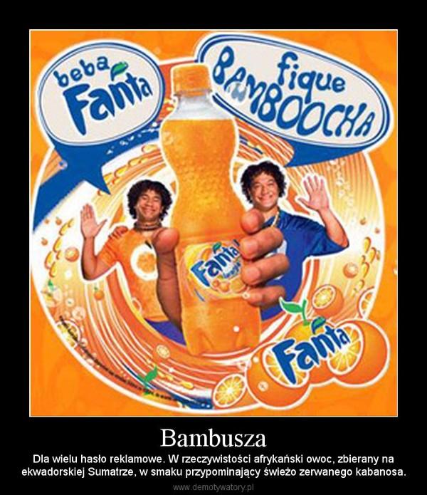 Bambusza – Dla wielu hasło reklamowe. W rzeczywistości afrykański owoc, zbierany naekwadorskiej Sumatrze, w smaku przypominający świeżo zerwanego kabanosa.