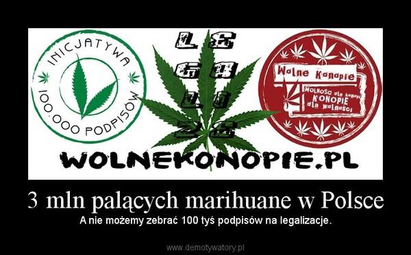 3 mln palących marihuane w Polsce – A nie możemy zebrać 100 tyś podpisów na legalizacje.