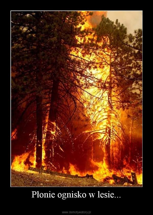 plonie ognisko w lesie