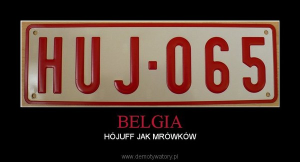 BELGIA – HÓJUFF JAK MRÓWKÓW