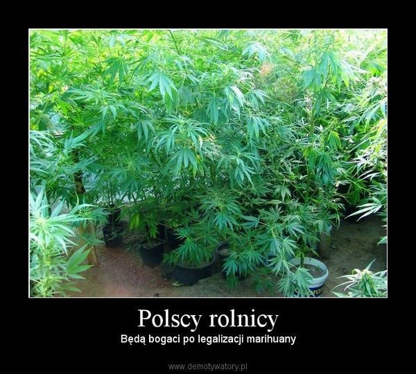 Polscy rolnicy – Będą bogaci po legalizacji marihuany