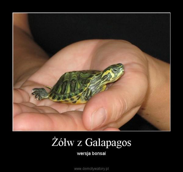 Żółw z Galapagos – wersja bonsai