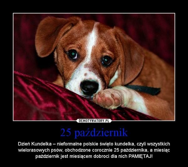 25 październik – Dzień Kundelka – nieformalne polskie święto kundelka, czyli wszystkich wielorasowych psów, obchodzone corocznie 25 października, a miesiąc październik jest miesiącem dobroci dla nich PAMIĘTAJ!