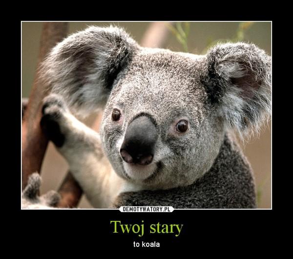 Twoj stary – to koala