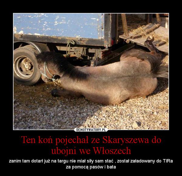 Ten koń pojechał ze Skaryszewa do ubojni we Włoszech – zanim tam dotarł już na targu nie miał siły sam stać , został załadowany do TIRa za pomocą pasów i bata