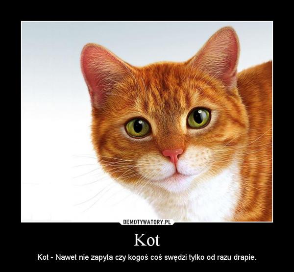 Kot – Kot - Nawet nie zapyta czy kogoś coś swędzi tylko od razu drapie.