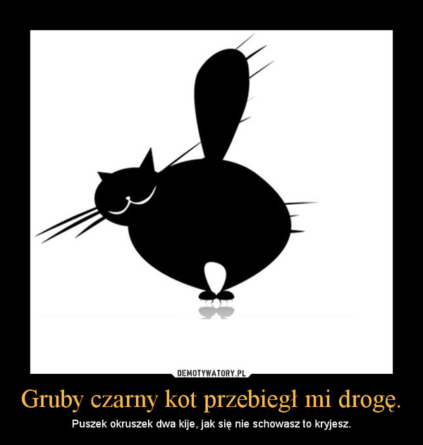 gruby czarny kotek
