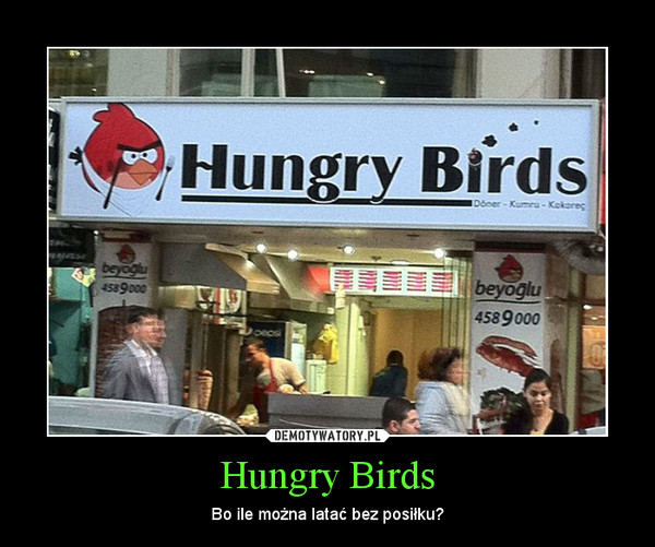 Hungry Birds – Bo ile można latać bez posiłku?