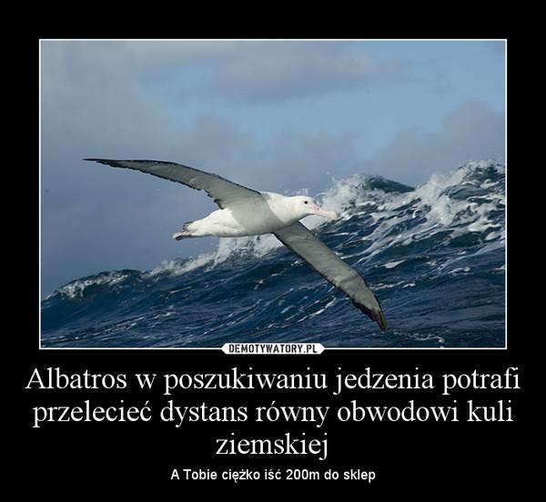 Albatros w poszukiwaniu jedzenia potrafi przelecieć dystans równy obwodowi kuli ziemskiej – A Tobie ciężko iść 200m do sklep