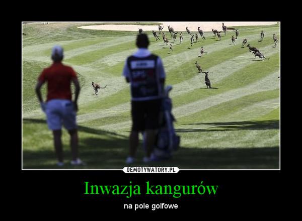 Inwazja kangurów – na pole golfowe