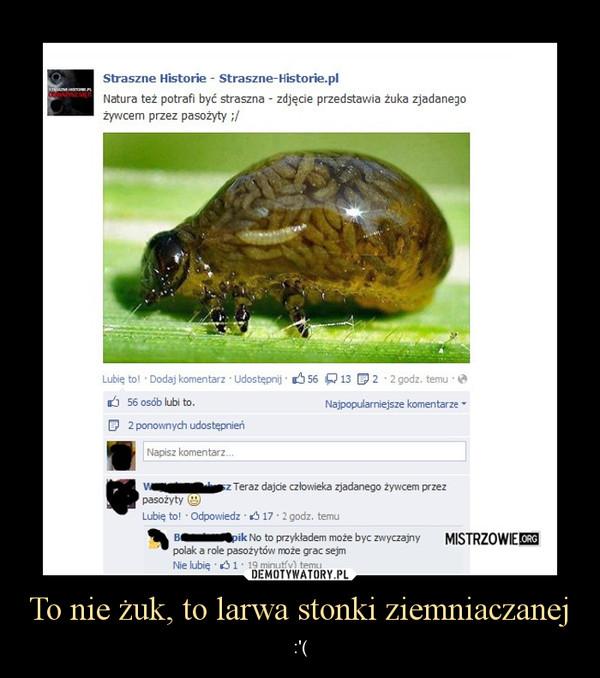 To nie żuk, to larwa stonki ziemniaczanej – :\'(