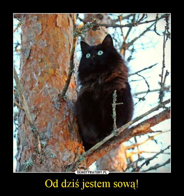 Od dziś jestem sową! –