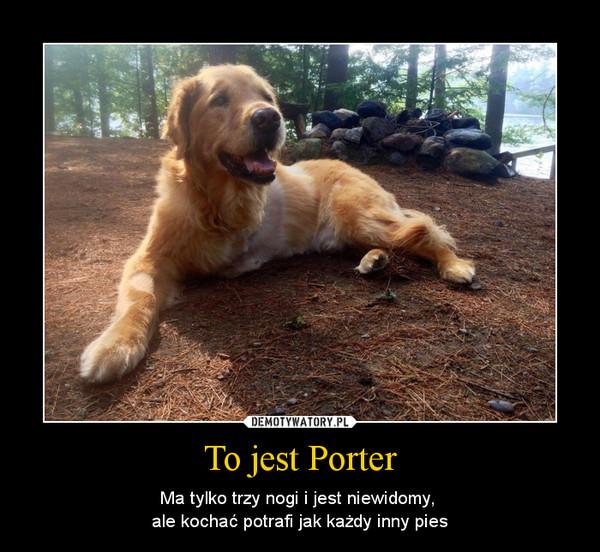 To jest Porter – Ma tylko trzy nogi i jest niewidomy, ale kochać potrafi jak każdy inny pies