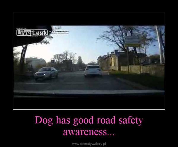 Dog has good road safety awareness... –