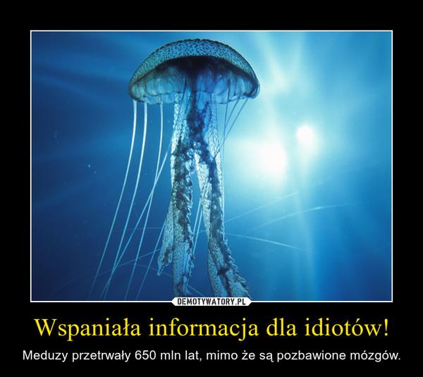 Wspaniała informacja dla idiotów! – Meduzy przetrwały 650 mln lat, mimo że są pozbawione mózgów.
