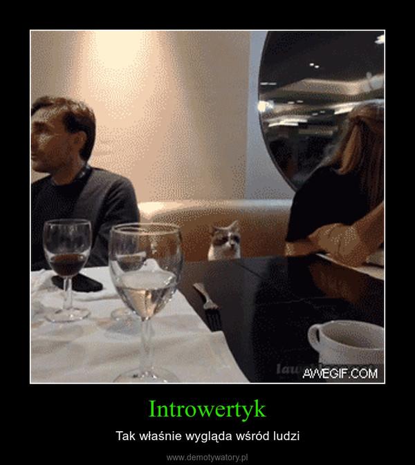 Introwertyk – Tak właśnie wygląda wśród ludzi