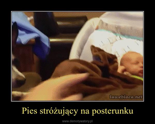 Pies stróżujący na posterunku –