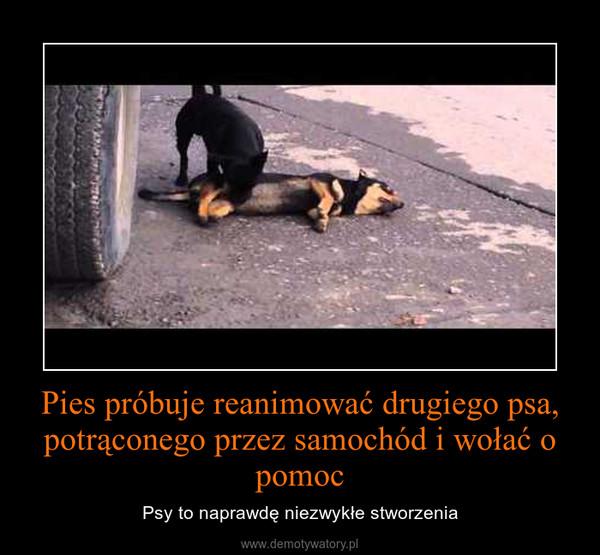 Pies próbuje reanimować drugiego psa, potrąconego przez samochód i wołać o pomoc – Psy to naprawdę niezwykłe stworzenia