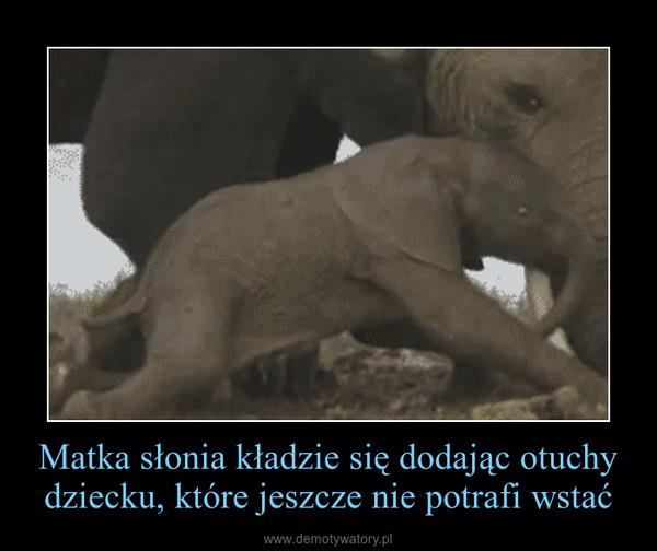 Matka słonia kładzie się dodając otuchy dziecku, które jeszcze nie potrafi wstać –
