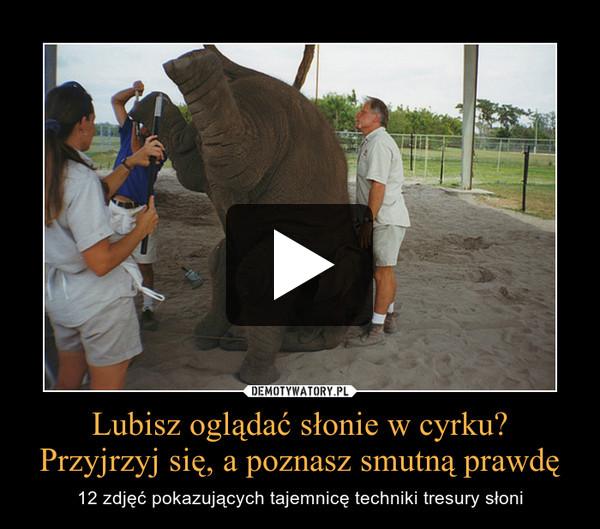 Lubisz oglądać słonie w cyrku?Przyjrzyj się, a poznasz smutną prawdę – 12 zdjęć pokazujących tajemnicę techniki tresury słoni
