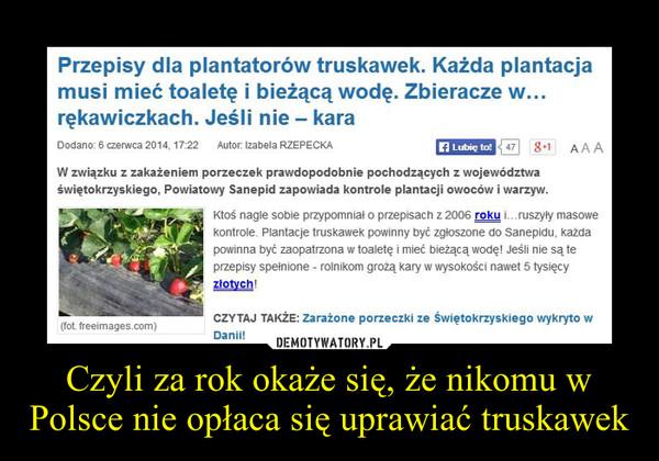 Czyli za rok okaże się, że nikomu w Polsce nie opłaca się uprawiać truskawek –