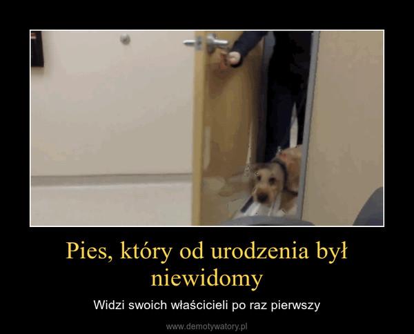 Pies, który od urodzenia był niewidomy – Widzi swoich właścicieli po raz pierwszy