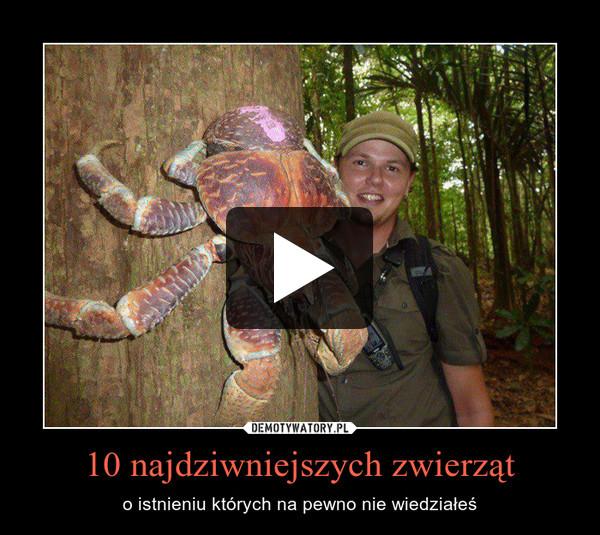 10 najdziwniejszych zwierząt – o istnieniu których na pewno nie wiedziałeś