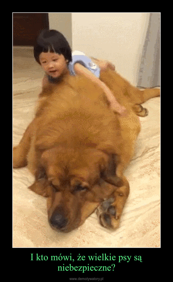 I kto mówi, że wielkie psy są niebezpieczne? –