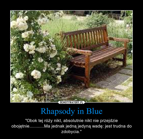 """Rhapsody in Blue – """"Obok tej róży nikt, absolutnie nikt nie przejdzie obojętnie............Ma jednak jedną jedyną wadę: jest trudna do zdobycia."""""""