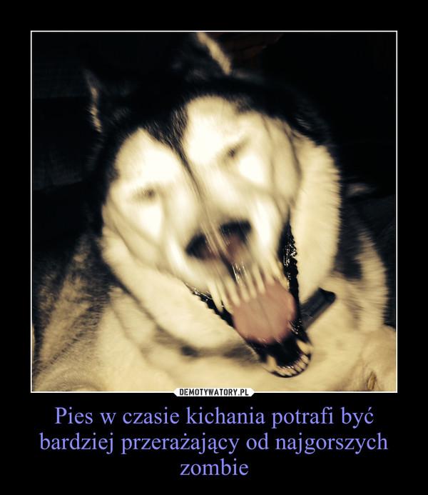 Pies w czasie kichania potrafi być bardziej przerażający od najgorszych zombie –