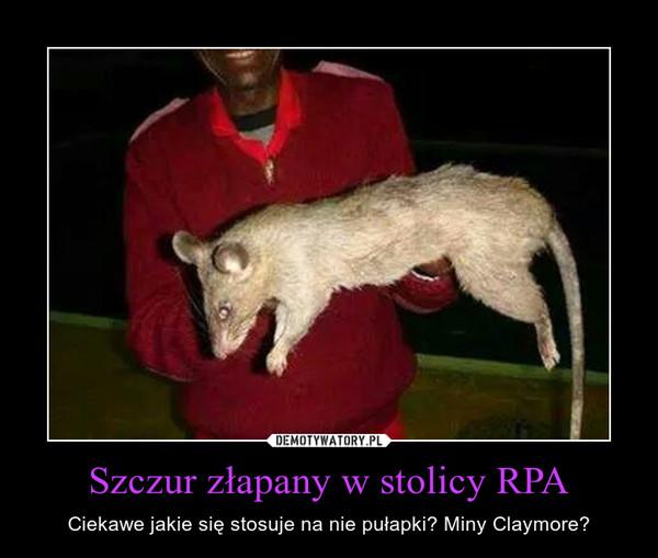 Szczur złapany w stolicy RPA – Ciekawe jakie się stosuje na nie pułapki? Miny Claymore?
