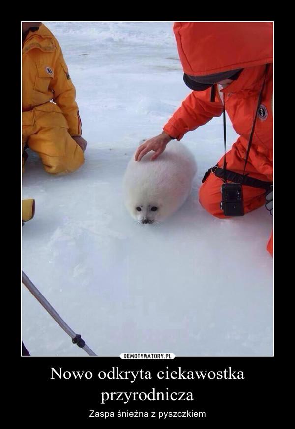 Nowo odkryta ciekawostka przyrodnicza – Zaspa śnieżna z pyszczkiem