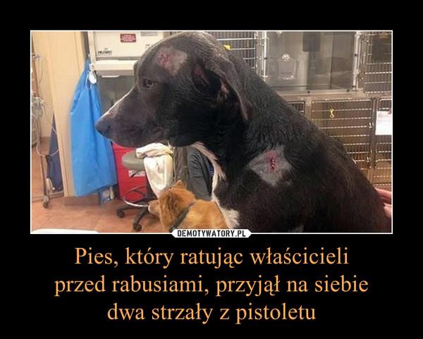 Pies, który ratując właścicieliprzed rabusiami, przyjął na siebiedwa strzały z pistoletu –