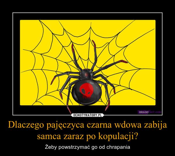 Dlaczego pajęczyca czarna wdowa zabija samca zaraz po kopulacji? – Żeby powstrzymać go od chrapania