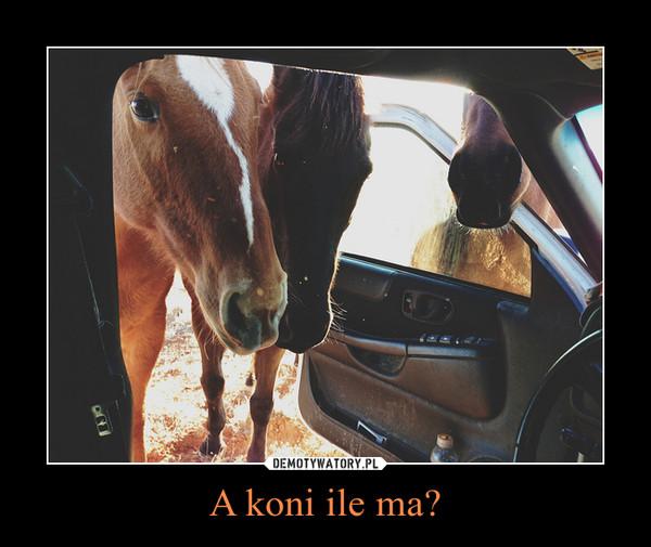 A koni ile ma? –