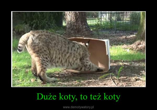 Duże koty, to też koty –