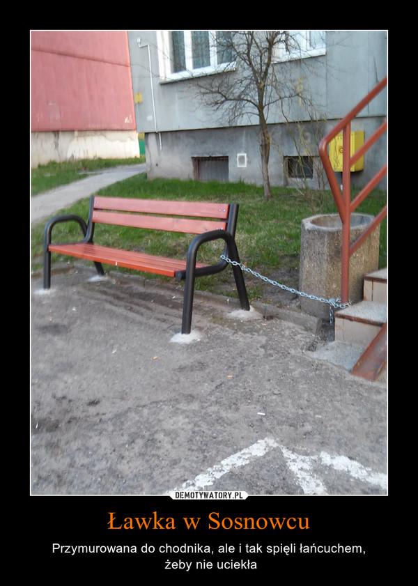 Ławka w Sosnowcu – Przymurowana do chodnika, ale i tak spięli łańcuchem, żeby nie uciekła
