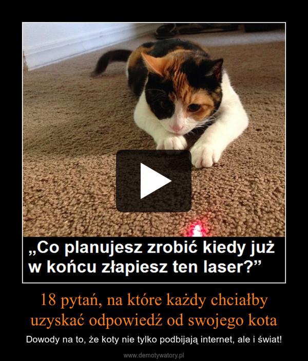 18 pytań, na które każdy chciałby uzyskać odpowiedź od swojego kota – Dowody na to, że koty nie tylko podbijają internet, ale i świat!