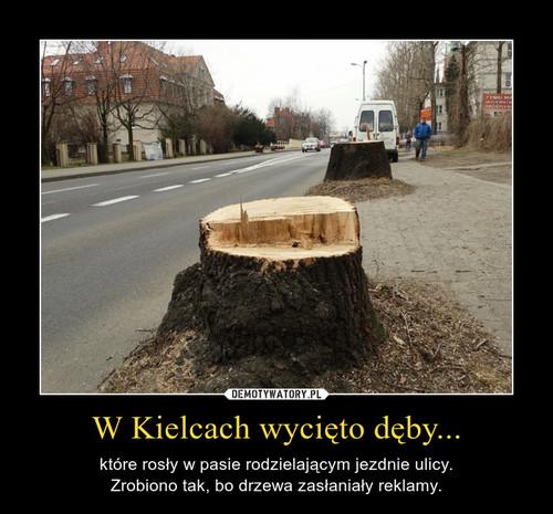 W Kielcach wycięto dęby...