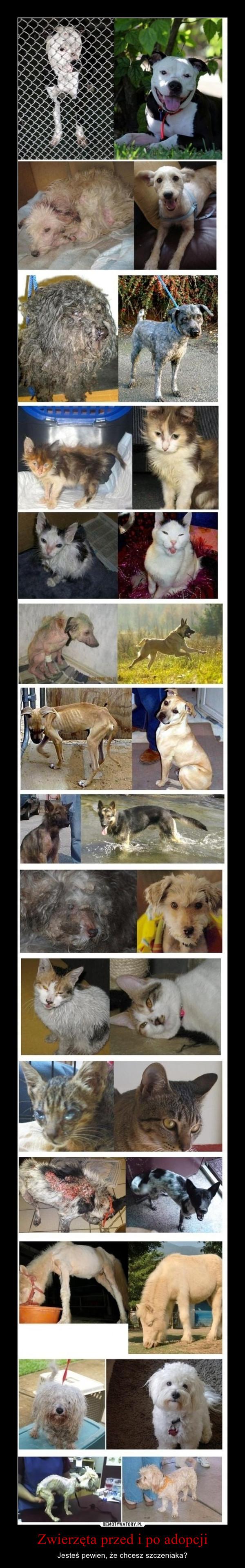 Zwierzęta przed i po adopcji – Jesteś pewien, że chcesz szczeniaka?
