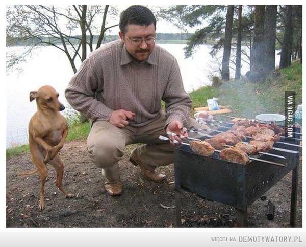 Psi zgredek...i grill –
