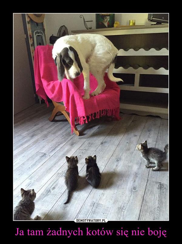 Ja tam żadnych kotów się nie boję –