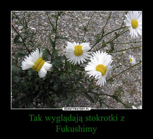 Tak wyglądają stokrotki z Fukushimy –