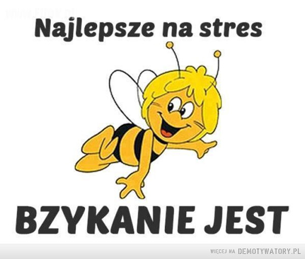 Odstresowanie –  Najlepsze na stresbzykanie jest