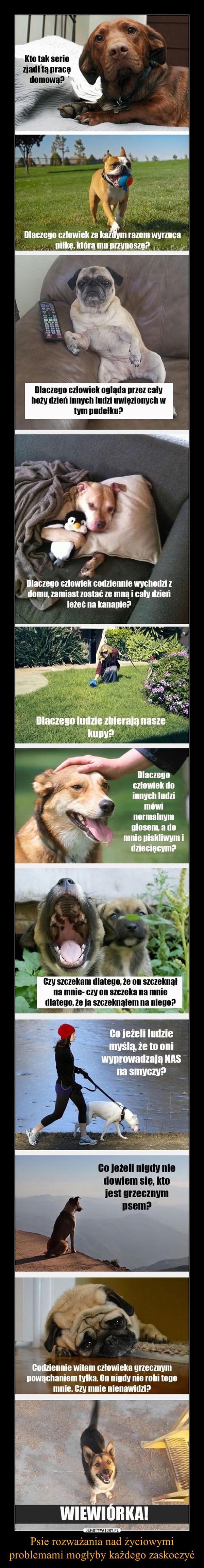 Psie rozważania nad życiowymi problemami mogłyby każdego zaskoczyć –