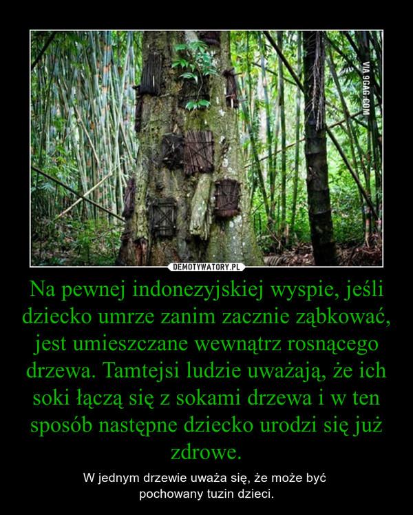Na pewnej indonezyjskiej wyspie, jeśli dziecko umrze zanim zacznie ząbkować, jest umieszczane wewnątrz rosnącego drzewa. Tamtejsi ludzie uważają, że ich soki łączą się z sokami drzewa i w ten sposób następne dziecko urodzi się już zdrowe. – W jednym drzewie uważa się, że może być pochowany tuzin dzieci.
